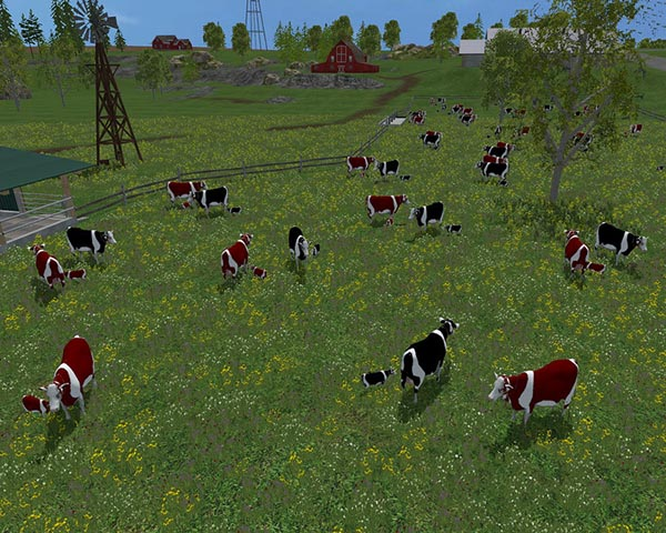 Cow family with Sound