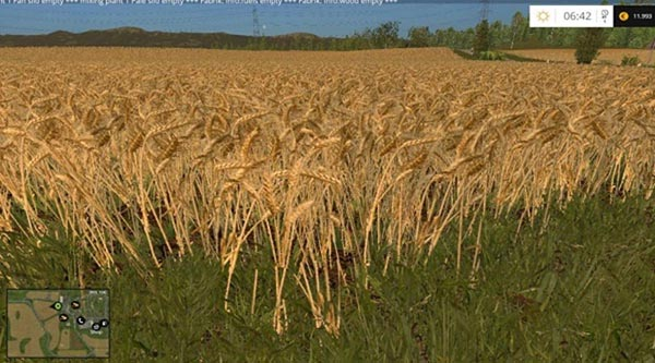 Wheat and barley texture